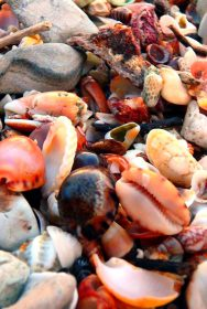 shells