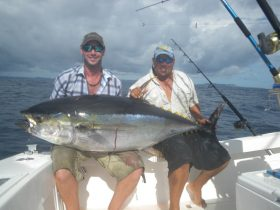 150# plus Yellowfin