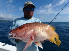 A pig Yellow Snapper