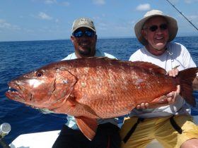 Dogtooth Snapper (Cubera)