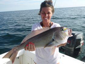 Golden-Brow Tilefish
