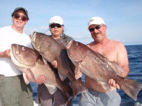 The Jersey boyz and some nice Gulf Coneys